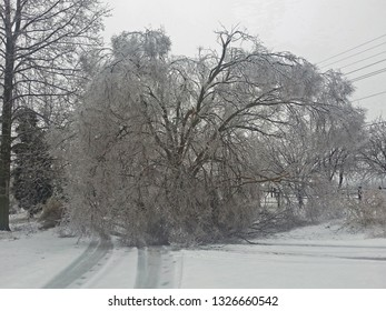huge elm tree covered in ice blocking country lane