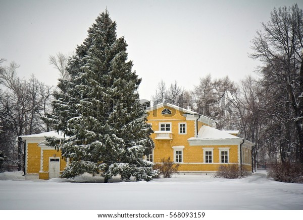 Huge fir in snow in front of the Pushkin's manor in Boldino, Russia