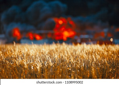 Huge fire among gold wheat fields