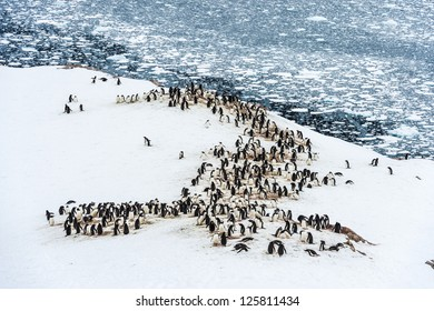 Huge group of penguins in Neko Harbour, Antarctica