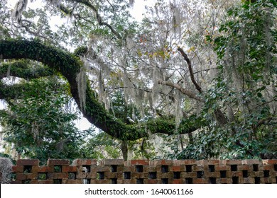 A huge live oak branch covered with resurrection ferns hangs over a traditional southern brick wall in the lowcountry near Myrtle Beach, South Carolina.