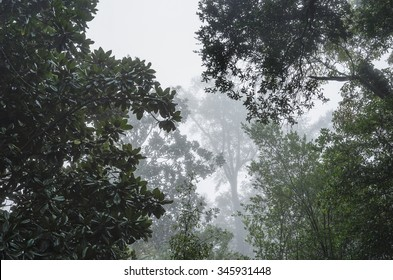 Huge live oaks and dark waxy magnolia trees form a moody canopy on a foggy humid morning in the Deep South USA. Good mortice or background shot.