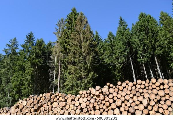 Gran pila de troncos (tronco de coníferas, producido por la gestión sostenible de los bosques) - bosque en segundo plano