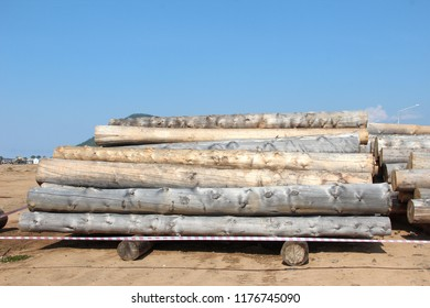 a lot of huge logs