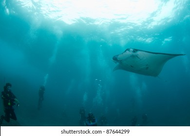 huge manta ray surrounded by divers