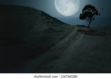 Huge moon in the night sky, silhouettes of a tree and birds, night landscape.