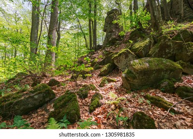 huge mossy rocks in the forest. beautiful nature scenery in spring. wild beech forest