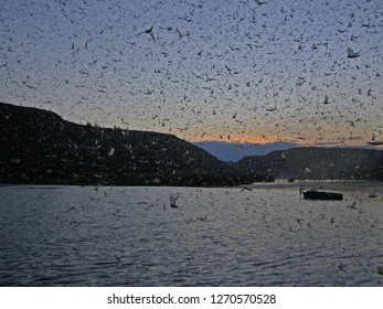 A huge number of insects mayflies flying over a wide river on a summer evening at sunset