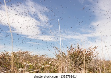 A huge number of mosquitoes (chironomids) fly in the air over the summer tundra against the blue sky.