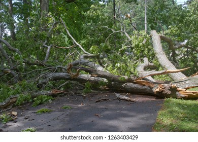 A huge old oak tree falls, shattering across a narrow road completely blocking it
