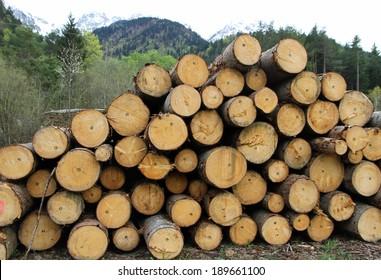 huge pile of logs cut by lumberjack in the Woods