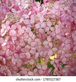 A huge pink flower. Background