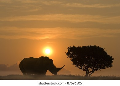 A huge rhinoceros standing in sunset aside an African Acacia tree