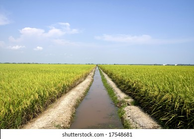 Huge rice plantation with a surface water storage