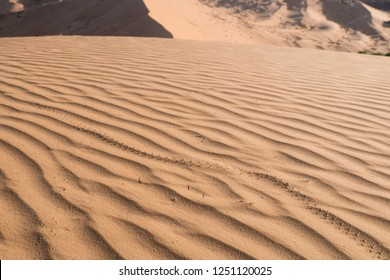 Huge sand dune in the Sahara at amazing morning light with traces of animal in the sand
