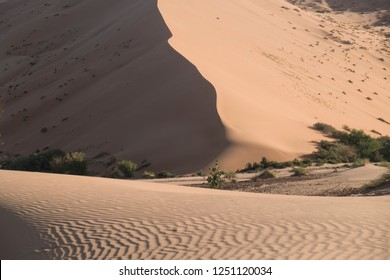 Huge sand dune in the Sahara at Beauty morning light with some trees