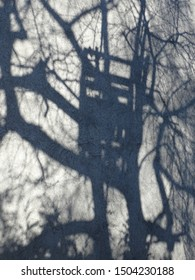 Huge shadow of a children's tree house and the tree appearing at a wall of a grey house