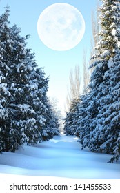 huge silvery moon over the snow-covered spruce alley