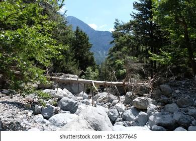 Huge skads in the gorge of Samaria, Crete, Greece. National Reserve gorge Samaria. A tree has fallen, a heaped tree