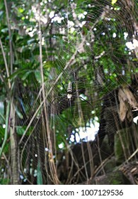 A huge spider in Bali, a safari in Bali