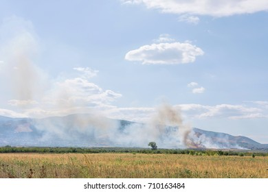 Huge Summer Dangerous Field Mass Fire