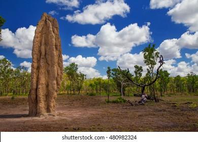 A huge termite mound in Kakadu National Park, Australia