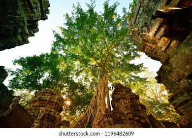 """Huge tree, illuminated by beautiful backlit, growing in the middle of ancient Ta Phrom Vat temple, Inscribed in UNESCO world Heritage list.""""Tomb Rider"""" movie was filming. Angkor, Siem Reap, Cambodia."""