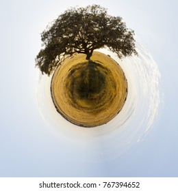 A huge tree standing alone on a wide field from a tiny world perspective