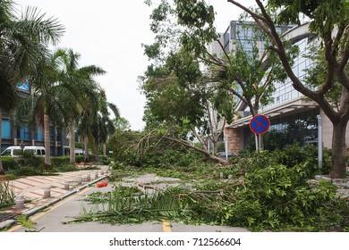 The huge trees destroyed near luxury hotel when the typhoon hited Xiamen city, Xiamen, Fujian provicne, China