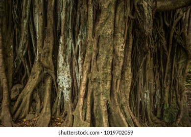 Huge trunk of a enormous tree