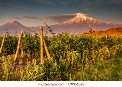Huge vineyards in the root of the mountains and gorgeous Ararat Mount in the background in the sunset in Armenia
