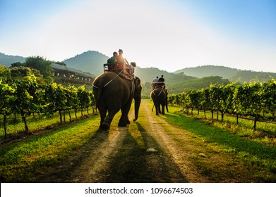 Hugged by mountain ranges and endless expanse of greenery, the vineyard offers a delightful excursion, complete with wine-tasting and dining opportunities.