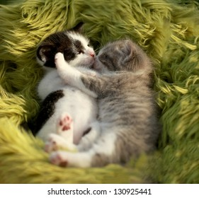 Hugging Little Kittens Outdoors in Natural Light