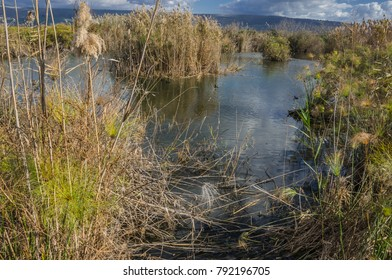Hula nature reserve marshes wetland in Hula valley, lies within the northern part of Syrian-African Rift, between the Golan Heights in the east and Upper Galilee mountains in the west, Israel
