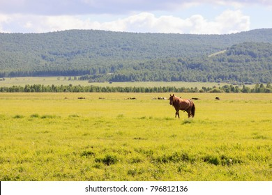 Hulunbuir Grasslands near Enhe, China