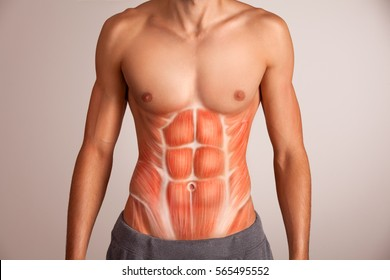 Human abdominal muscle.