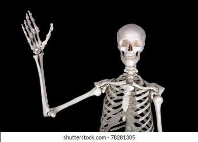 Human Anatomy funny