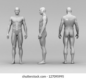 Human anatomy and joints