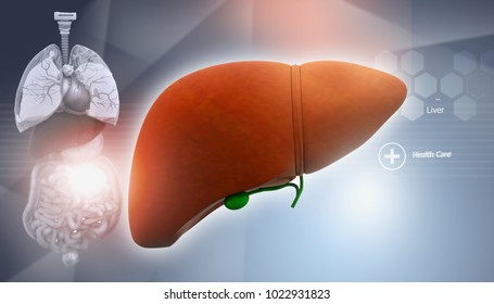 Human anatomy with liver. 3d illustration