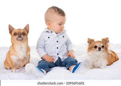 human baby and chihuahua in front of white background