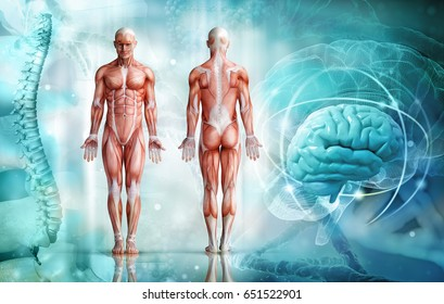 human body; 3d illustration