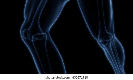 Human Body Bone Joint Pains (Knee Joint). 3D