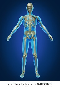 Human body and skeleton with the skeletal anatomy in a rested pose on a dark blue background as a health care and medical concept.