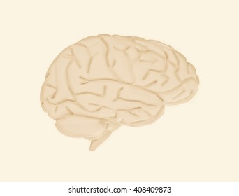 Human brain. 3D rendering