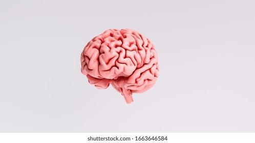 Human brain Anatomical Model, medical concept image