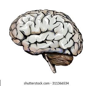 Human brain, cerebellum and headaches