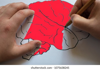 Human Brain Diagram . The brain is drawn on paper with a pencil. Brain is the concept of the mind.