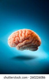 Human brain floating on a blue background / Selective focus