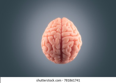 Human brain floating on a gray background