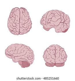 Human brain four views. Top, frontal, side, three-quarter. Flat brains icons. Graphic illustration